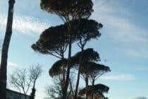 Rangée de pins