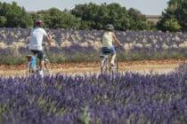Site VTT FFC – Provence Verdon – Circuit Vert – Valensole