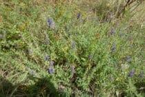 A la découverte des plantes aromatiques, médicinales et gourmandes